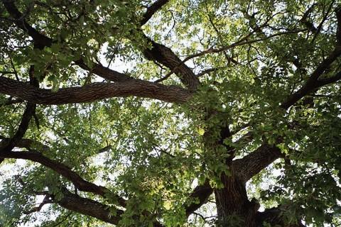 Les arbres et les rêves