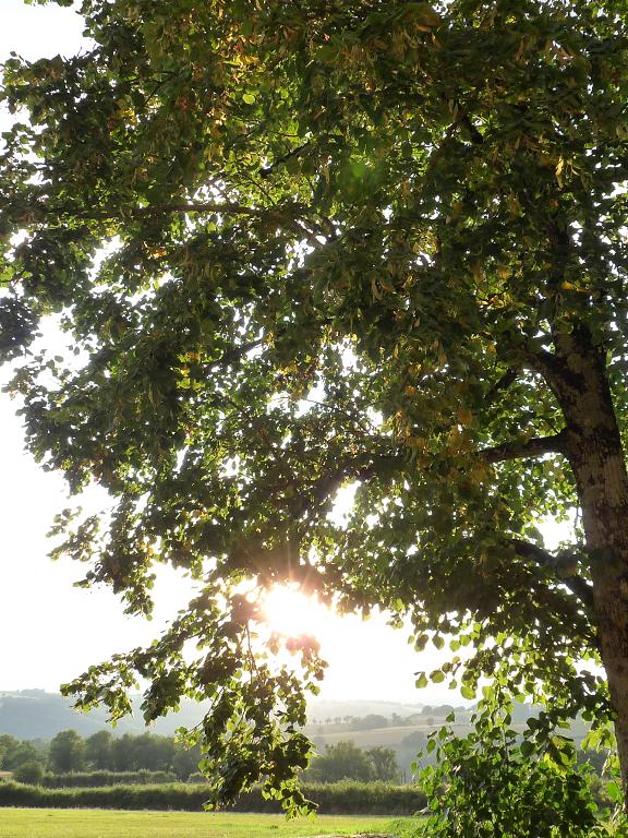 La musique et les arbres