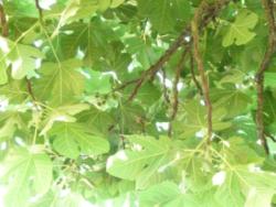 Déforestation – une proposition